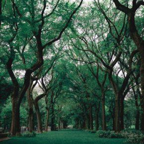 Corredor verde en Alcobendas